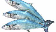 فوائد سمك الكنعد