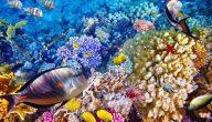 سبب موت السمكة عند خروجها من الماء