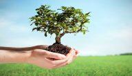 جمل عن أهمية الزراعة