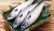 سمك البوري للحامل