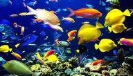 انواع سمك الزينة بالصور