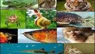 ما هي الحيوانات التي تتنفس عن طريق الغلاصم