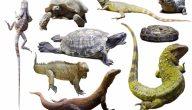 خصائص الزواحف للاطفال